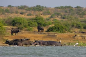 Wasser Safari - Uganda - Murchinsons Nationalpark